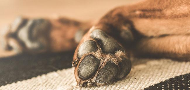 Consejos para mantener las patas de tu perro siempre limpias y saludables