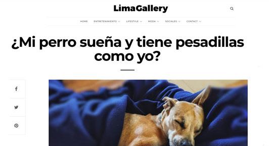 ¿Mi perro sueña y tiene pesadillas como yo?